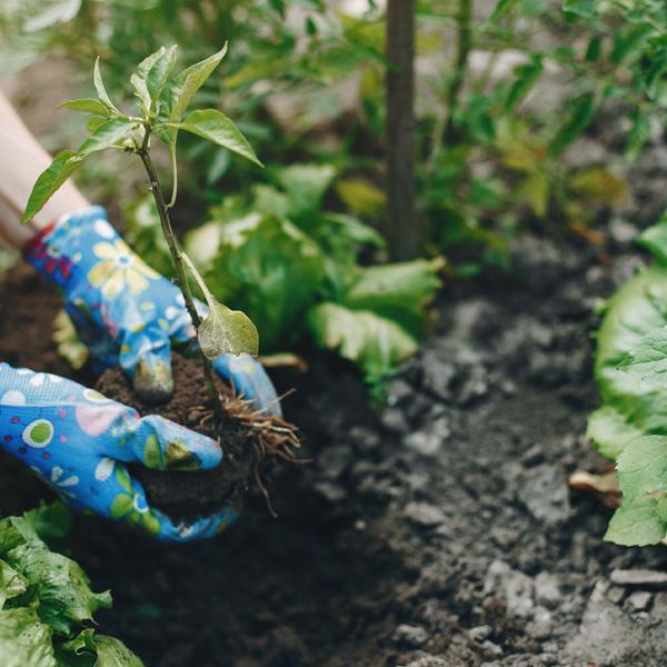 Projekt ogrodu Białystok - Warzywa w ogrodzie